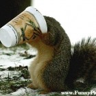 Funny-Squirrels-Funny-Squirrel-Picture-25-FunnyPica_com_-140x140