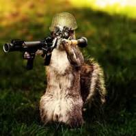 Squirel with gun
