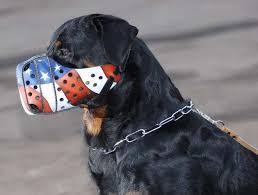 muzzled-dog